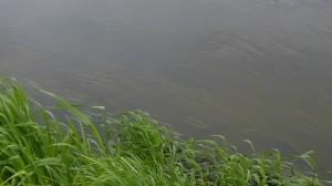Gewässerufer aus der Sicht eines Angelers ohne Polbrille ! Ein Großteil des Lichts wird reflektiert und man kann nicht in das Gewässer hineinsehen.